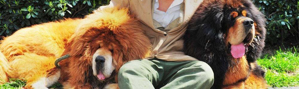 I cani disturbano e il tribunale stabilisce che vengano recise le corde vocali