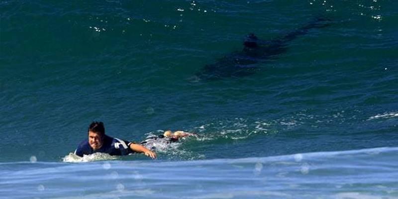 Attaccato da uno squalo