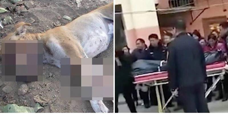gli uccide il cane: