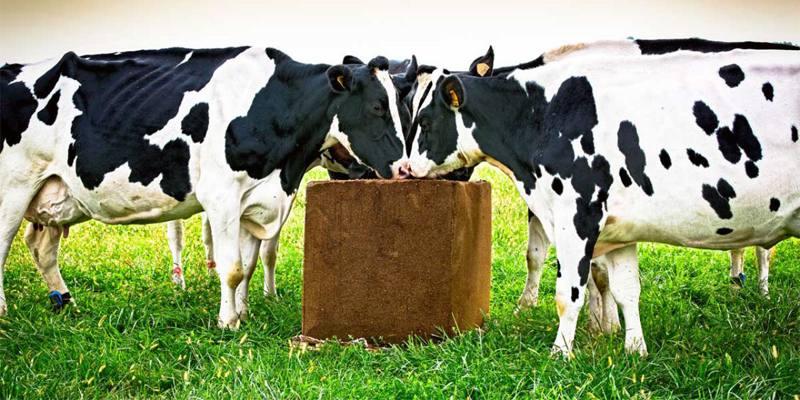 Finire in vacca