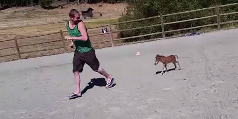 Sammy, il cavallo nano di soli 3 giorni che insegue il suo amico