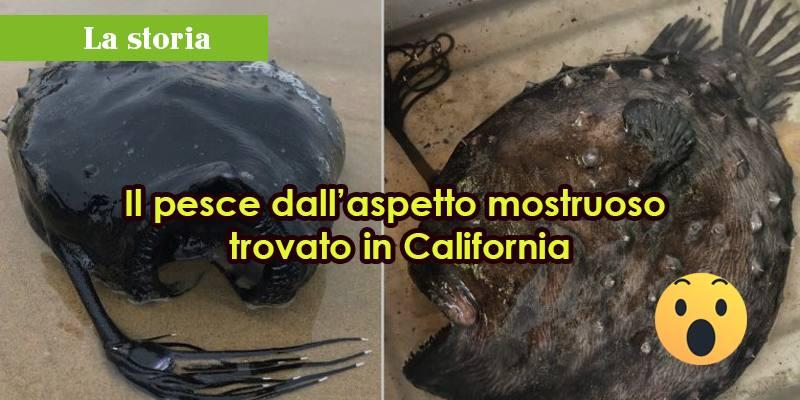 Il pesce dall'aspetto mostruoso trovato in California