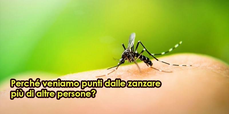 Perché veniamo punti dalle zanzare più di altre persone?