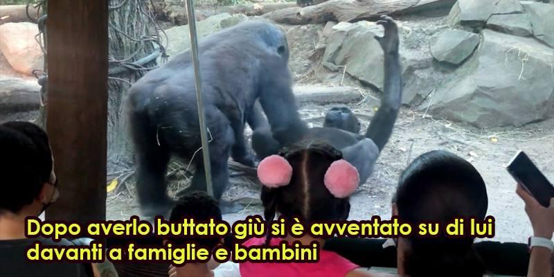 Allo zoo di New York un gorilla fa sesso orale al suo compagno
