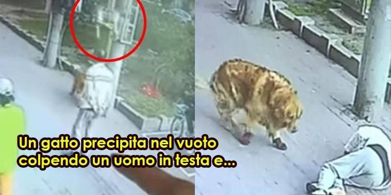 Il gatto cade in testa a un uomo, che viene soccorso da un cane con le scarpe
